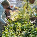 Get the dirt on all things green at Redcliffe Garden & Lifestyle Expo